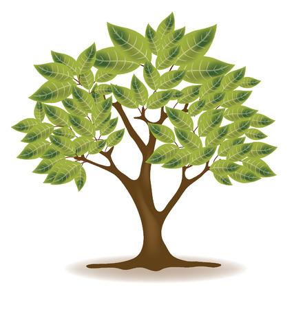 broad leaved tree: Vector tree illustration Illustration