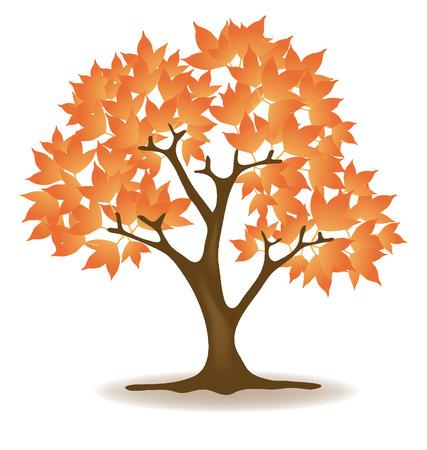 broad leaved tree: maple tree vector illustration  Illustration