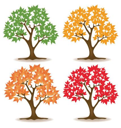 broad: maple tree vector illustration  Illustration