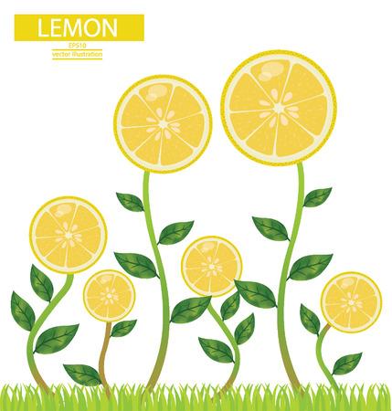 four leaved: lemons, tree vector illustration