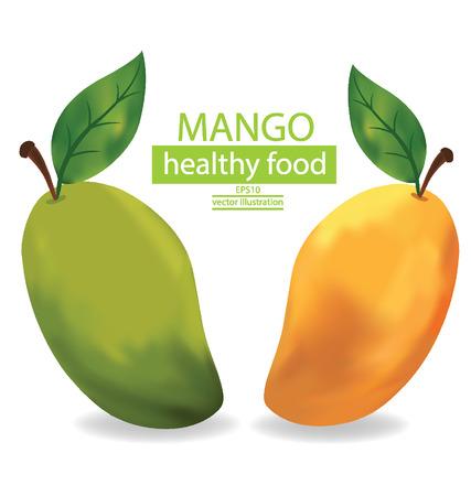 mango fruta: Ilustraci�n de la fruta del mango en el fondo blanco Vectores
