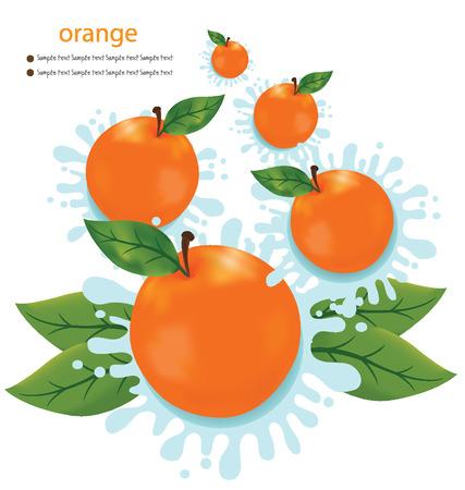 citrus tree: Orange splash vector illustration