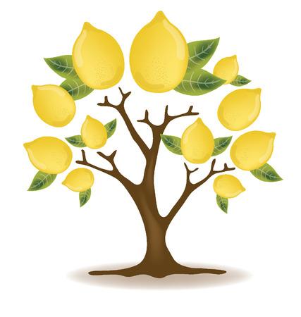 lemon tree: lemons tree illustration