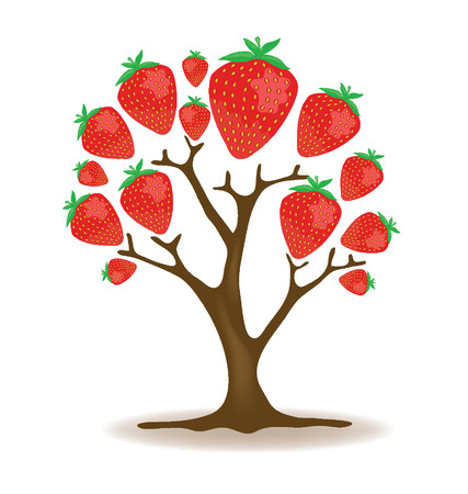 strawberry tree illustration Vector