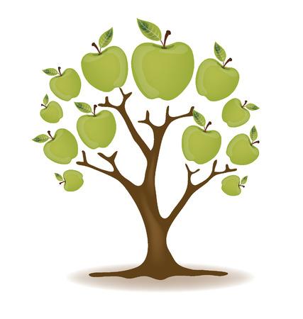 green apple slice: Apple tree illustration