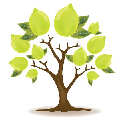 four leaved: lemons tree vector illustration