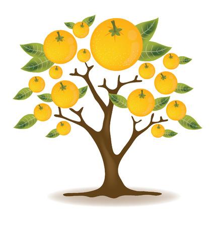 orange tree: Orange tree vector illustration Illustration