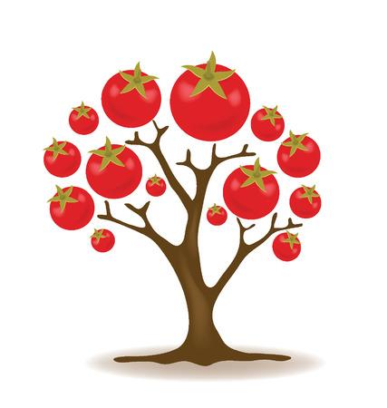 tomate de arbol: Ilustración del árbol de tomate