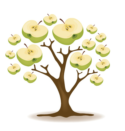 leaved: Apple tree illustration