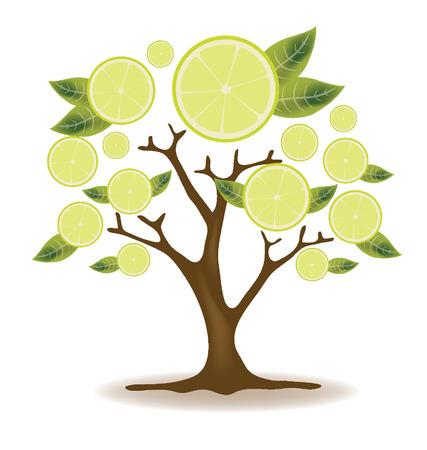 four leaved: lemons tree illustration