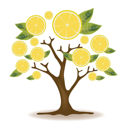 cross section of tree: lemons tree illustration