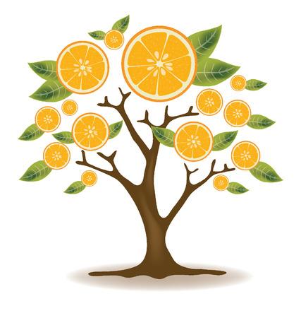 naranja arbol: Ilustraci�n Orange �rbol