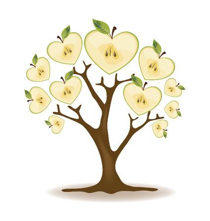 green apple slice: Apple tree vector  Illustration