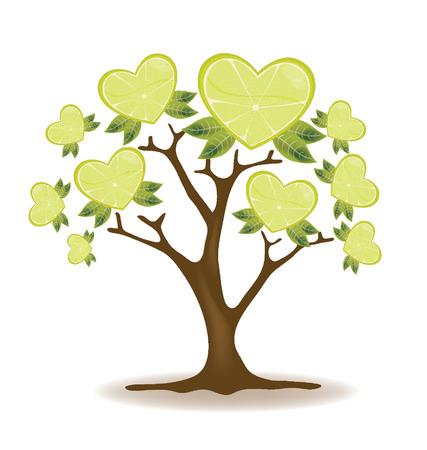 cross section of tree: lemons tree vector Illustration