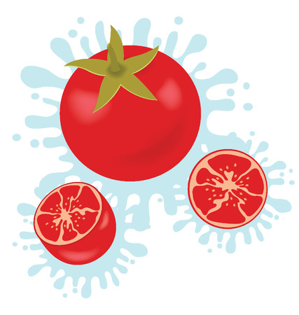 Tomato splash vector illustration Vector