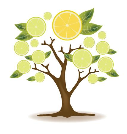 tree cross section: lemons tree illustration