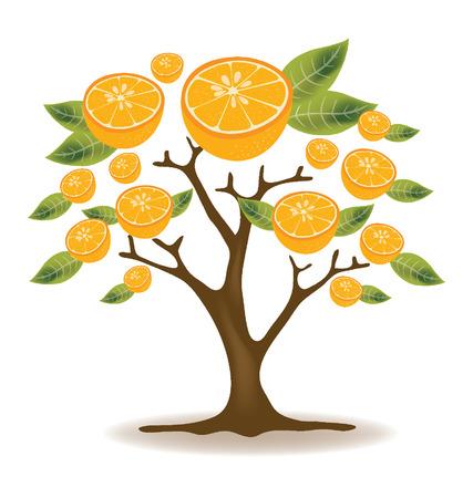 orange tree: Orange tree illustration