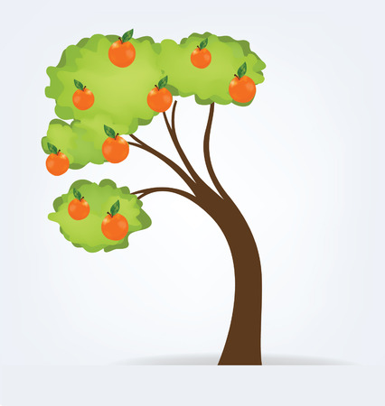 bole: Orange tree vector illustration Illustration
