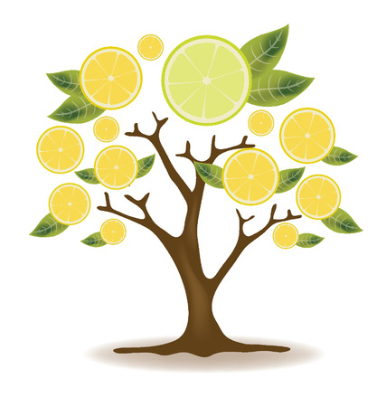 tree cross section: lemons tree vector illustration