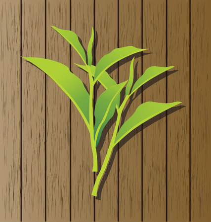 tea leaf: green tea Illustration