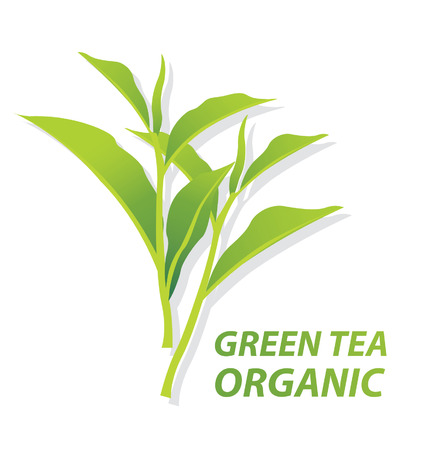 green tea Illustration