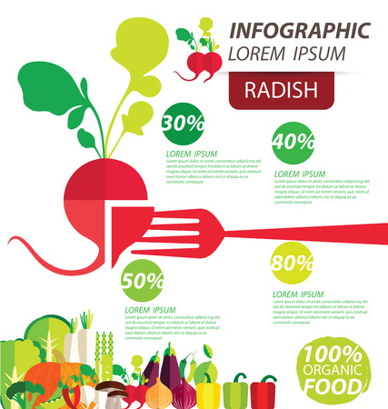 radish , infographics. vegetables vector illustration Vector