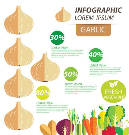 garlic , infographics. vegetables vector illustration Vector