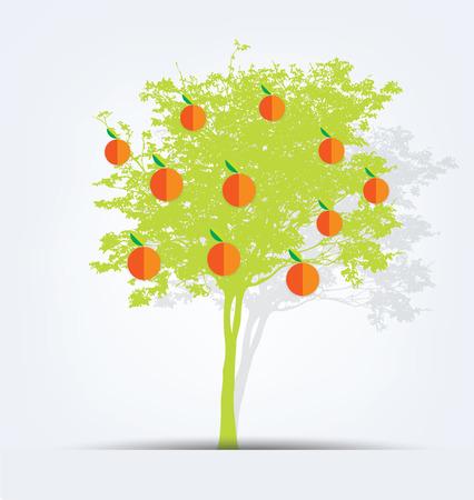 orange tree: orange tree vector illustration