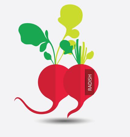 radish: radish ,vegetables vector illustration Illustration