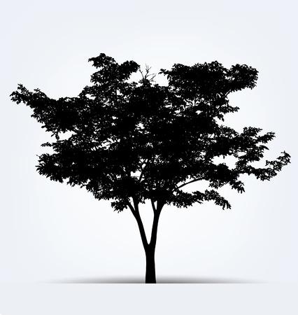 arboles blanco y negro: Siluetas del árbol. Ilustración del vector.