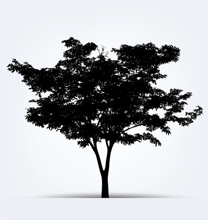 tree silhouettes: Tree silhouettes. Vector illustration.