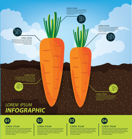 growing inside: carrot , infographics. vegetables vector illustration. Illustration