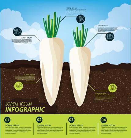 radish: radish , infographics. vegetables vector illustration