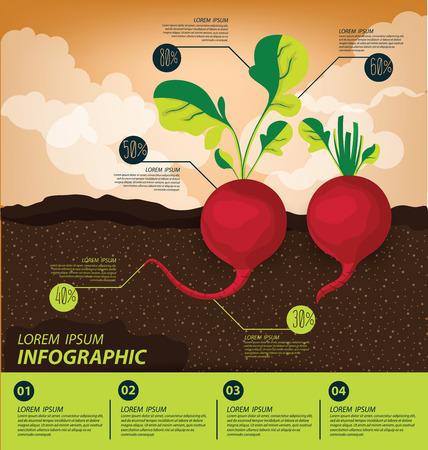 radijs, infographics. groenten vector illustratie