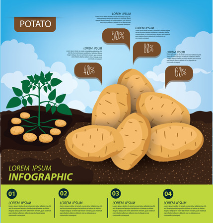 planta con raiz: papa, de infografía. ilustración vectorial verduras