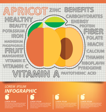 apricot: apricot, infographics. fruits vector illustration.
