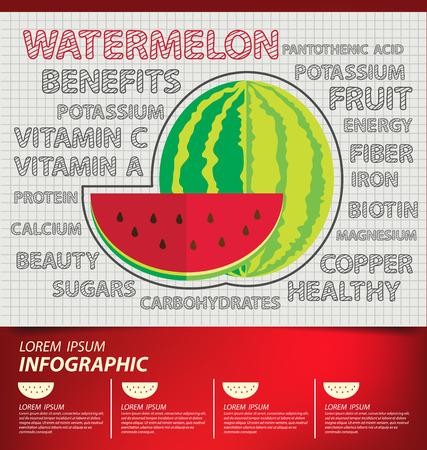 watermelon, infographics. fruits vector illustration.