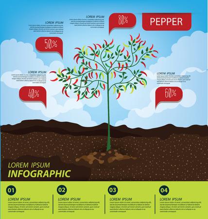 growth hot: pepper , infographics. vegetables vector illustration