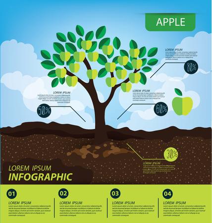アップル、インフォ グラフィック。果物はベクトル イラストです。