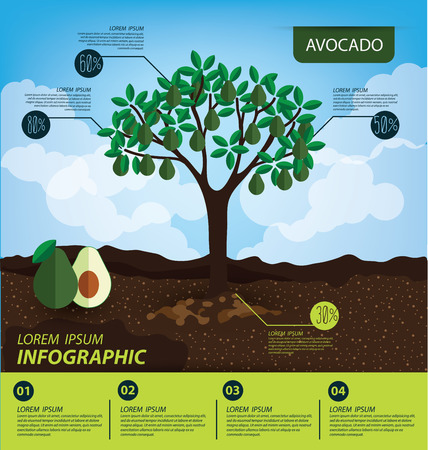 avocado, infographics. fruits vector illustration.
