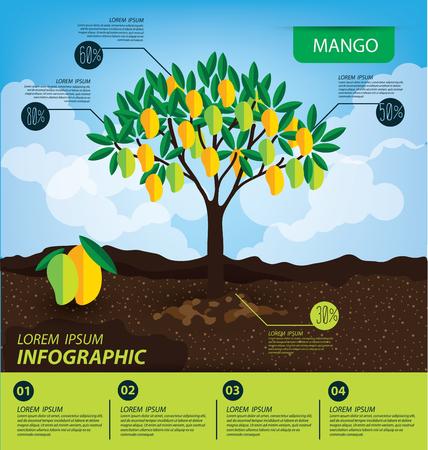 mango, infographics. fruits vector illustration.  イラスト・ベクター素材