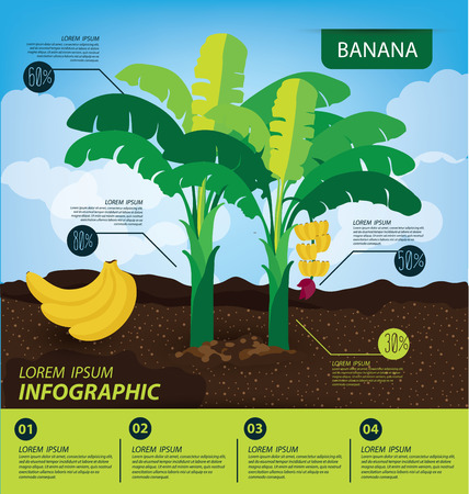 banana leaves: banana, infographics. fruits vector illustration.