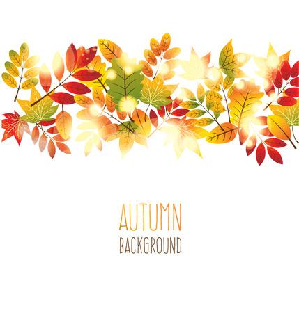 autumn leaves background: Vector autumn leaves background Illustration
