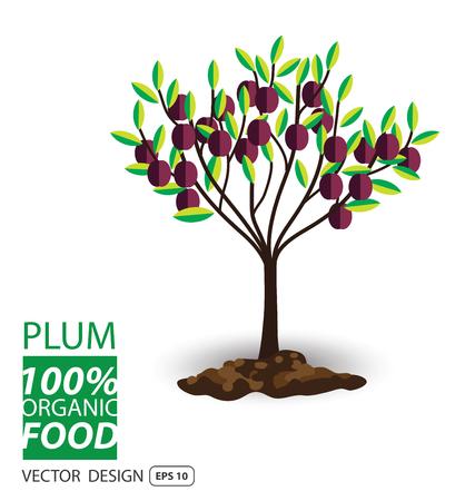 plum: Plum, fruits vector illustration. Illustration