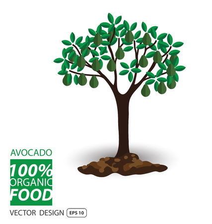 isolated tree: Avocado, fruits vector illustration.