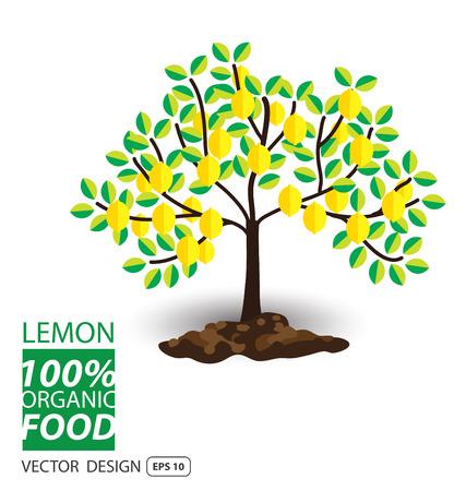 Lemon, fruits vector illustration.