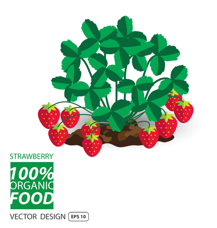 strawberry cartoon: Strawberry, fruits vector illustration.
