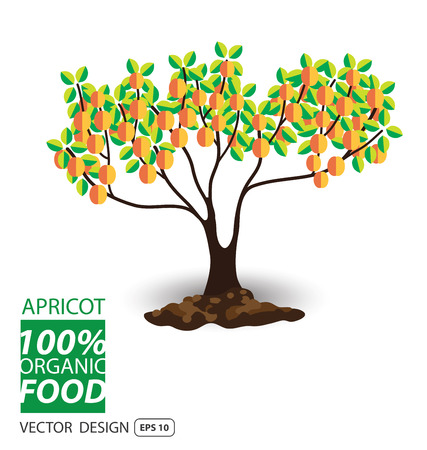 Apricot, fruits vector illustration.