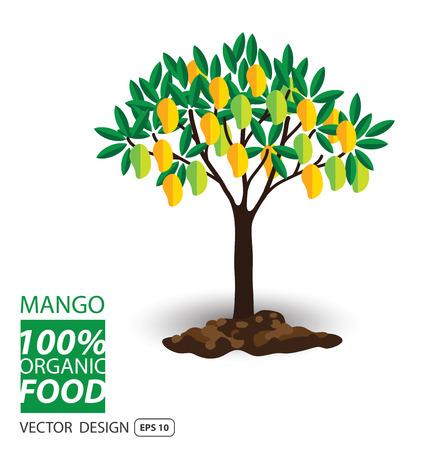 organic fruit: Mango, fruits vector illustration. Illustration