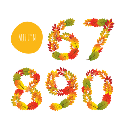 autumn color: Numbers of autumn leaves collection. Illustration